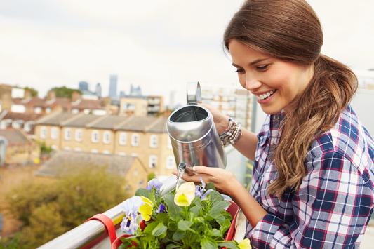השקייה במים מוגזים, פעם בשבוע, משפרת גדילה של צמחים